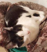 Katzenmädl Bibiana hat ihren Koffer