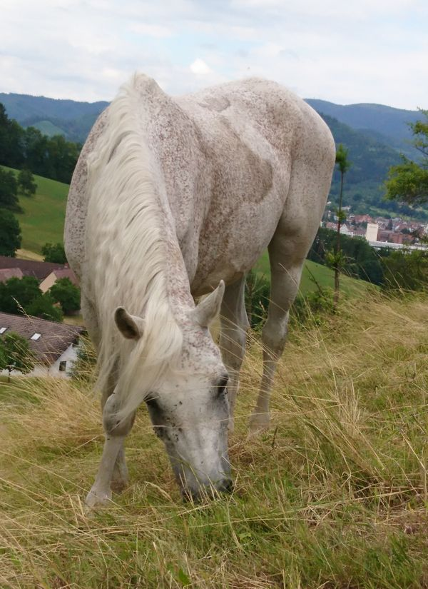 Biete Reitbeteiligung Pferd sucht Reitbeteiligung