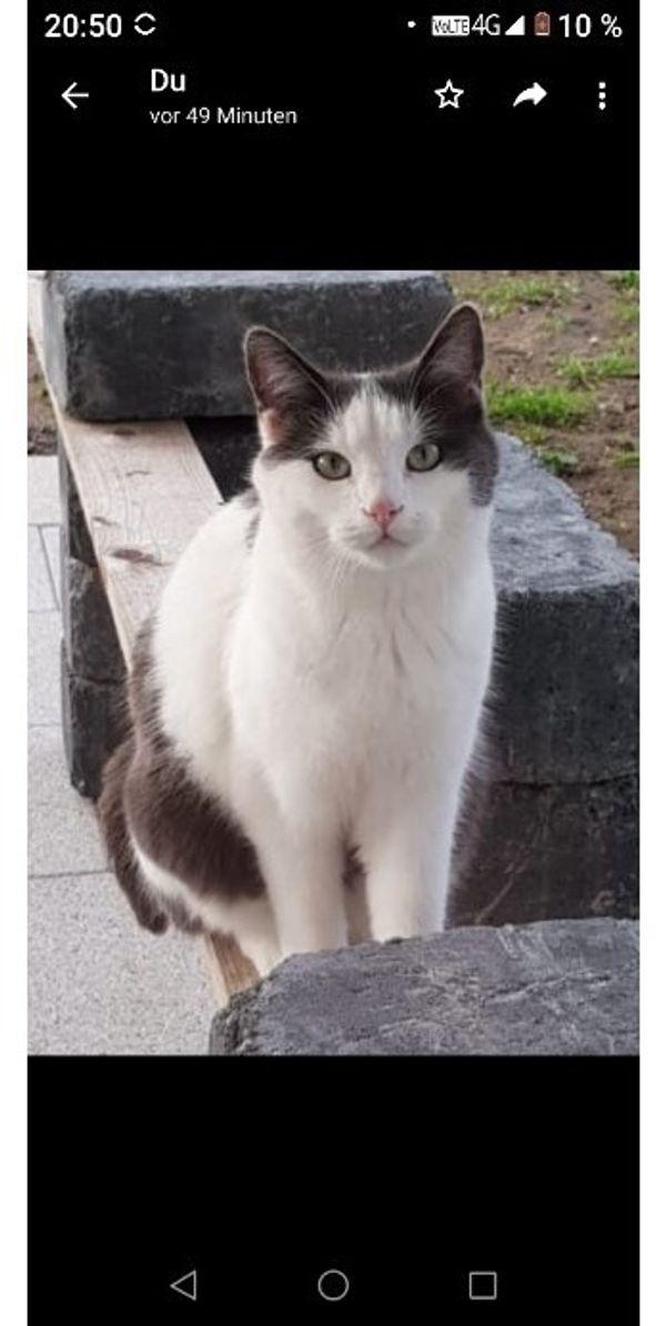 Katze vermisst eventl Grünwettersbach