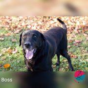 Boss - Ein großer Kerl mit