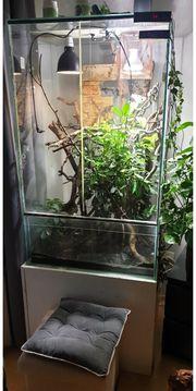 Regenwald terrarium
