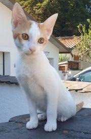 Verschmuste Katze sucht Zweitkatze