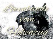 Löwenkopf Zwergkaninchen Löwenköpfchen Teddyzwerge