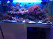 Meerwasseraquarium 120x55x55
