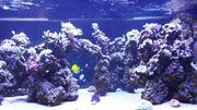 Meerwasseraquarium 2000L