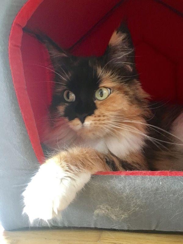 Unsere Angel sucht » Katzen