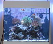 Aqua Medic Kauderni 200 Liter