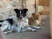 Viara 2 Jahre Tierschutzhund
