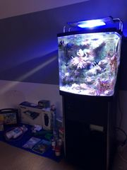 Meerwasseraquarium Salzwasseraquarium komplett
