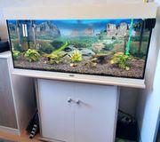Aquarium 100 x 40 x