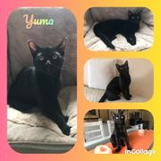 Baby Katze Kitten Yuma geimpft