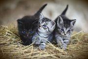 Köln Katzensitter gesucht Nebenjob auf