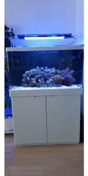 Meerwasseraquarium Meerwasser Aquarium Red Sea