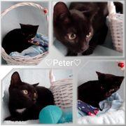 Baby Kater Kitten Peter geimpft