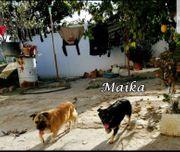 Maika und Curro warten auf
