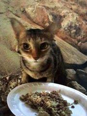 Katze Scubidoo zu