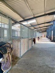 Pferdeboxen Offenstallplätze frei