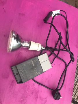 Terrarium Lampe