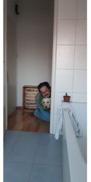 SUCHEN neues Familienmitglied Hund