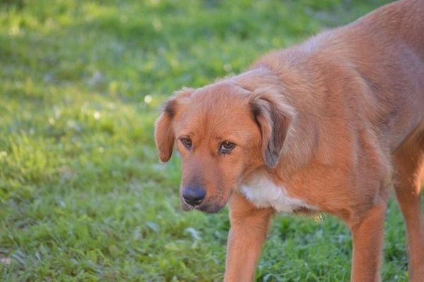Daria - idealer Familienhund und tolle