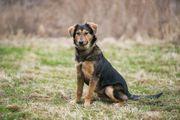 Mischlingshund 6 monate