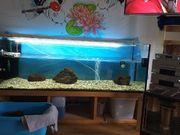 150 cm aquarium