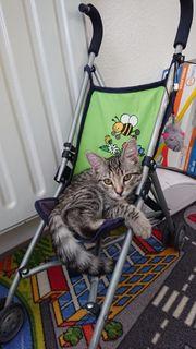 Babykatze sucht noch