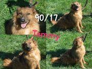Freundliche Tammy sucht liebe Familie