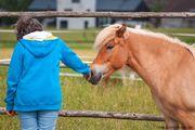 Seminare mit Pferden Pferdegestützte Persönlichkeitsentwicklung