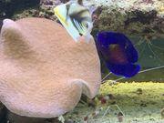 Neuwertiges Meerwasseraquarium von Juwel Vision