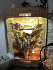 wüstenterrarium eckterrarium bartagamen terrarium holzterrarium