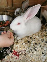 Kaninchen babys
