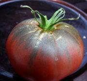 Starke Tomatenpflanzen von seltenen alten