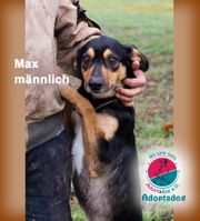 Max - hier kommt Max