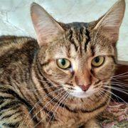 Freundliche Katze Urbosa möchte gern