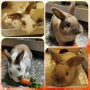Kaninchen Paar Coco und Anton