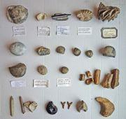 Fossilien Sammlung u a aus