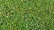 Wochenendgrundstück Grünfläche gesucht