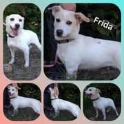 Kleine Hündin Frida 6 Jahre