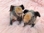 Skinny Meerschweinchen Mädchen