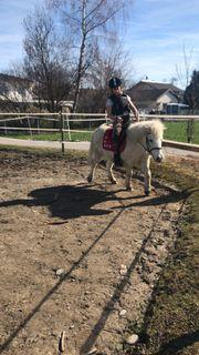 Appaloosa Wallach und Shetlandpony pferde