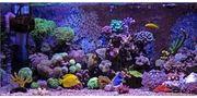 Suche Meerwasseraquarium