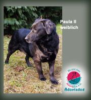 Paula - liebt das Gras unter