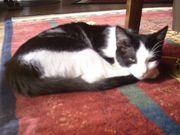 Vermisste Katze Fee
