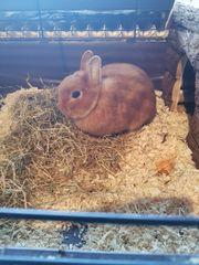 Kaninchen dringend in liebevolle Hände