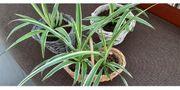 schöne Körbchen mit Grünpflanzen