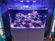 Reserviert Meerwasser Komplettaquarium