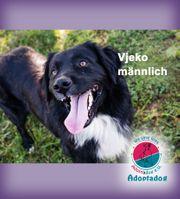 Vjeko - ein Familienhund der Abwechslung