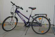 Fahrrad Pegasus