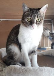 Süßes Kätzchen Azumi sucht ihr
